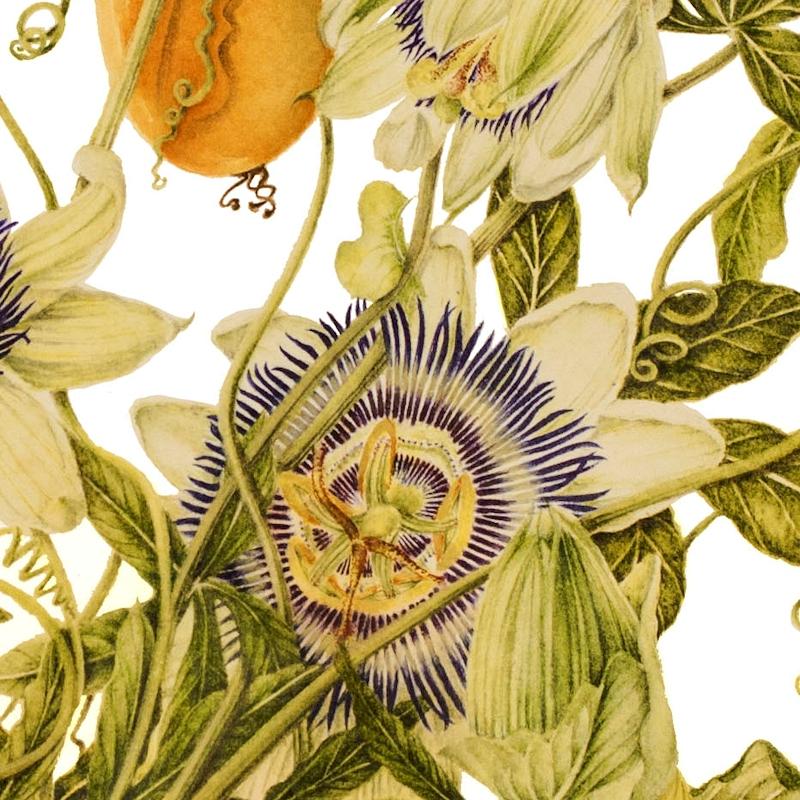 Passiflora2013detail