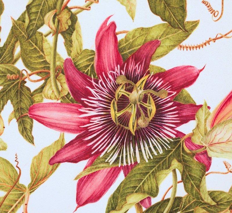 Passiflora2014detail