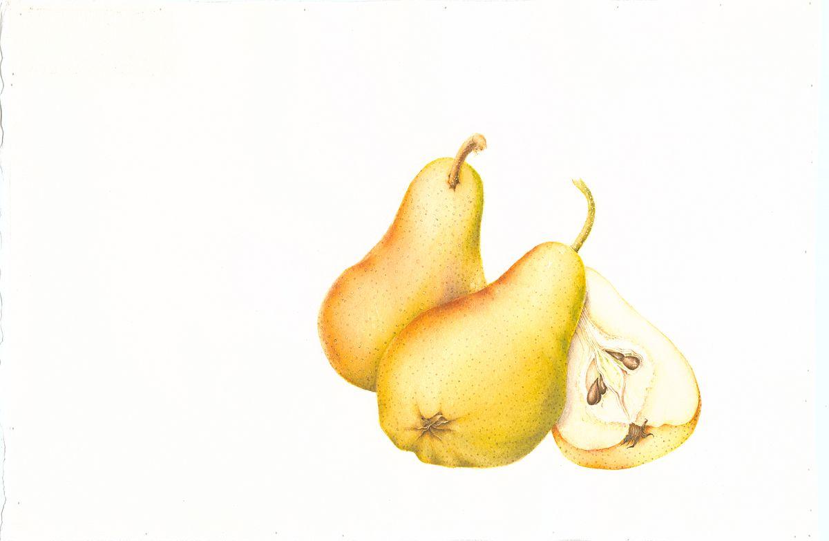Pyrus communis (pears)
