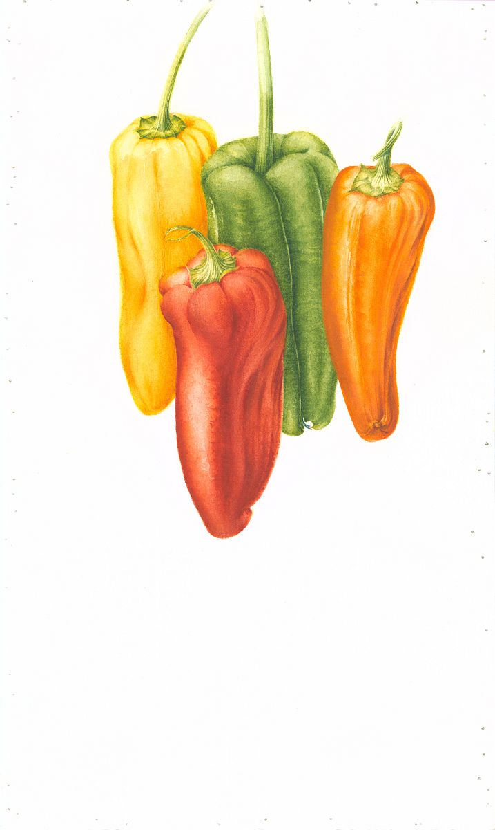 Capsicum annuum (peppers)